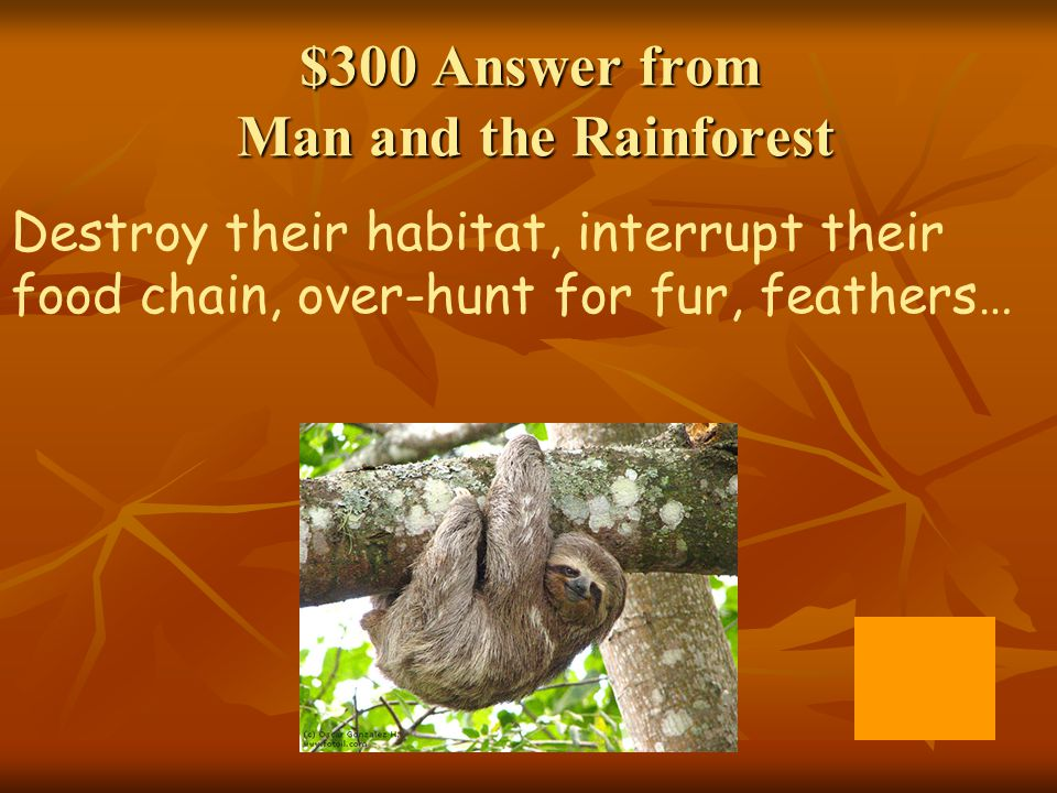 $300 Answer from Man and the Rainforest