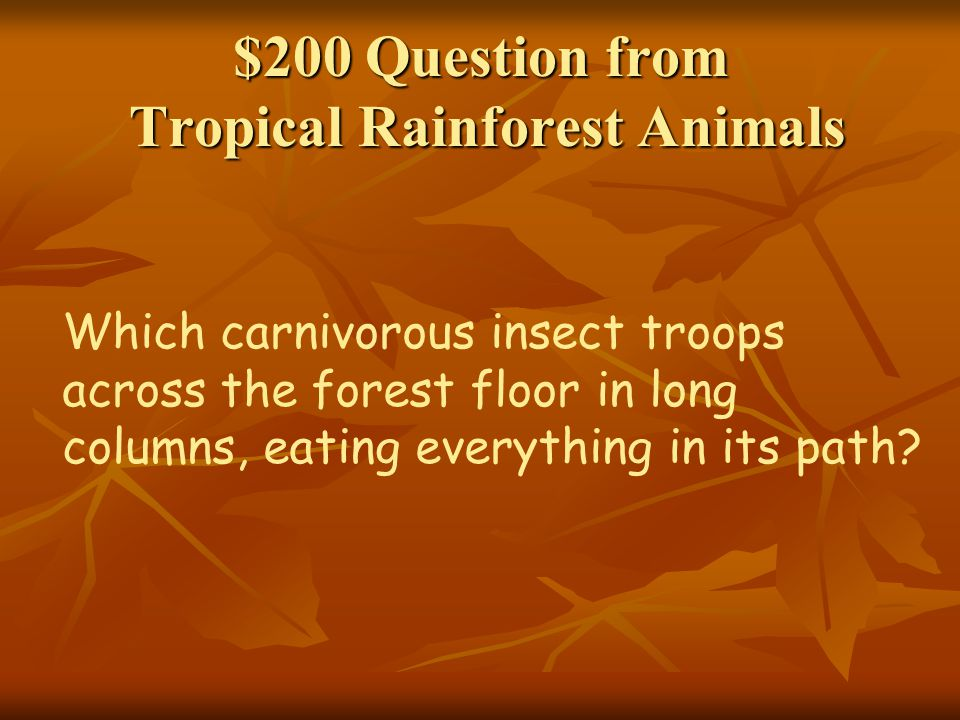 $200 Question from Tropical Rainforest Animals