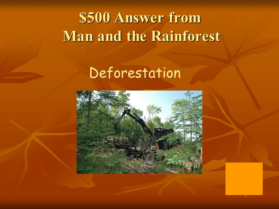 $500 Answer from Man and the Rainforest