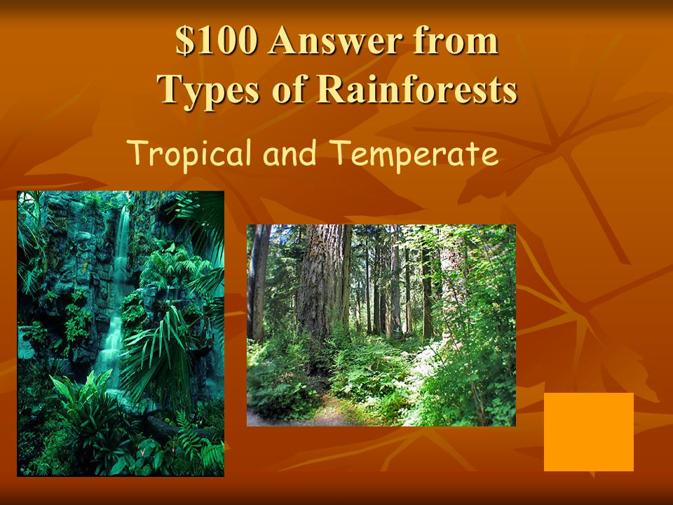 $100 Answer from Types of Rainforests