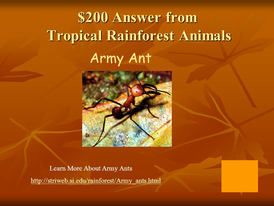 $200 Answer from Tropical Rainforest Animals