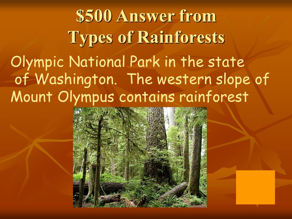 $500 Answer from Types of Rainforests
