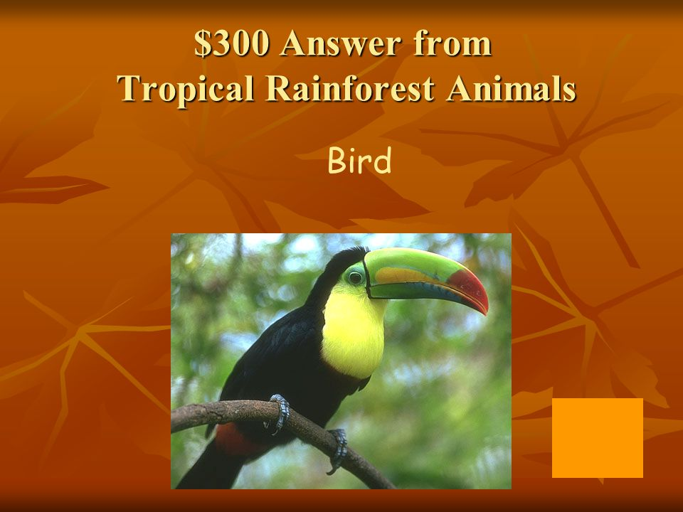 $300 Answer from Tropical Rainforest Animals