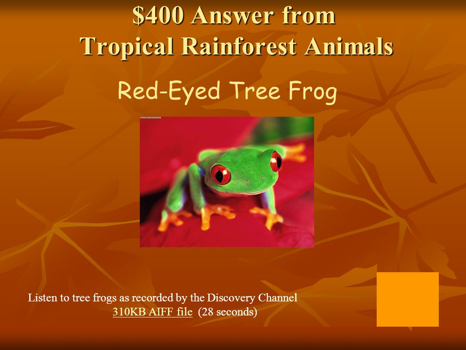 $400 Answer from Tropical Rainforest Animals