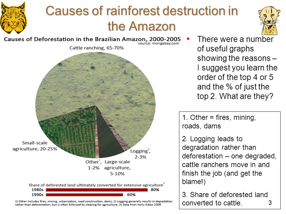 Causes of rainforest destruction in the Amazon