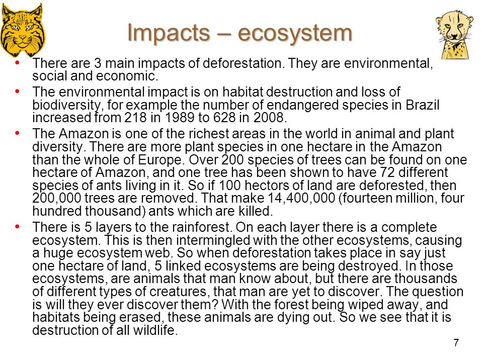 Impacts – ecosystem There are 3 main impacts of deforestation. They are environmental, social and economic.