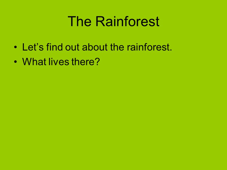 The Rainforest Let's find out about the rainforest. What lives there