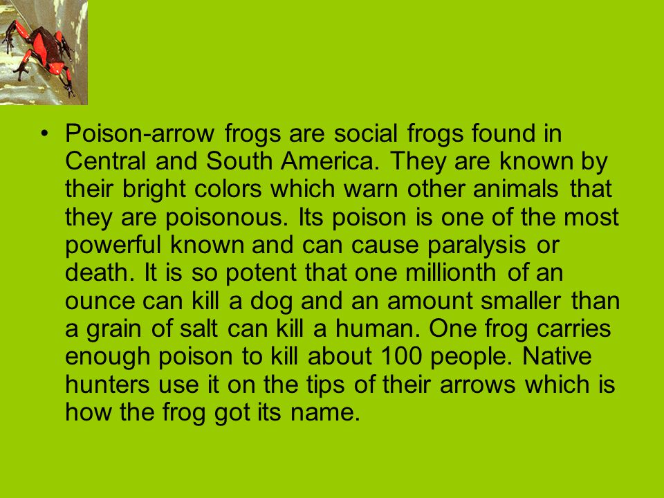 Poison-arrow frogs are social frogs found in Central and South America