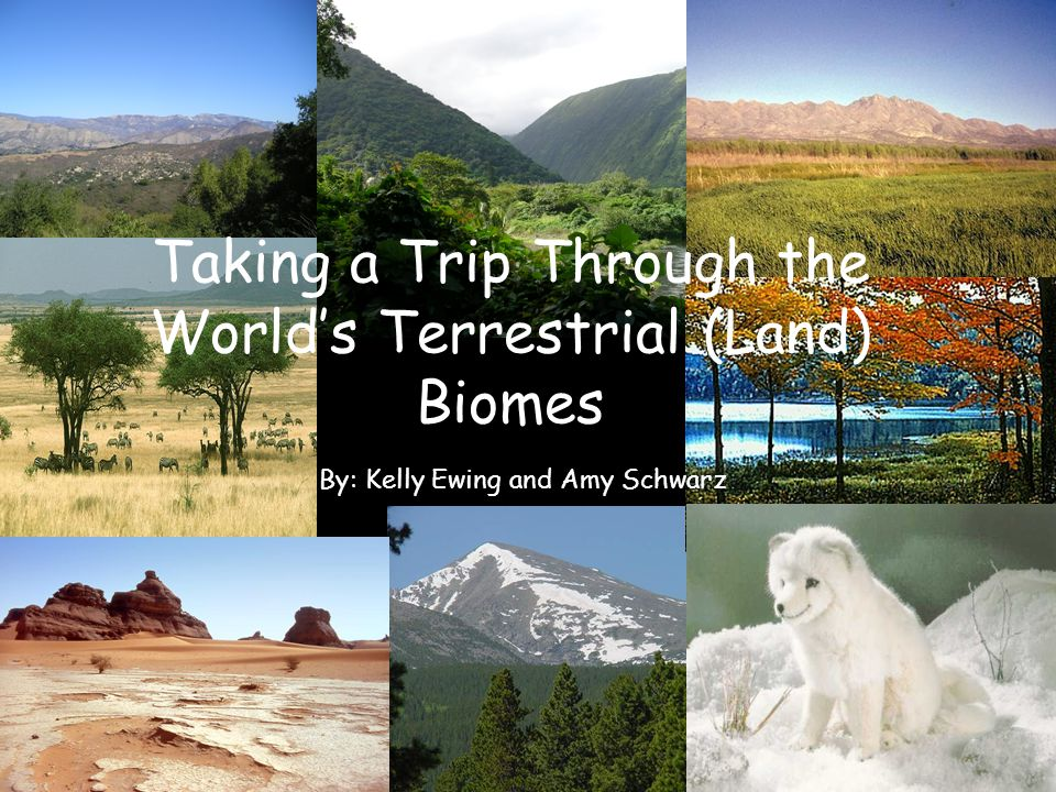 Taking a Trip Through the World's Terrestrial (Land) Biomes