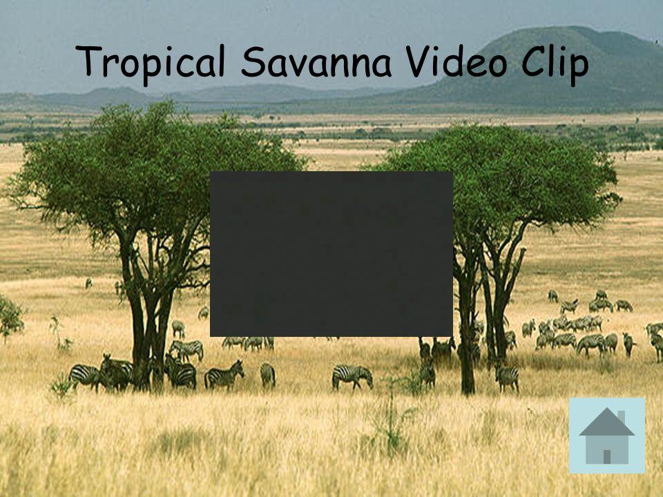 Tropical Savanna Video Clip