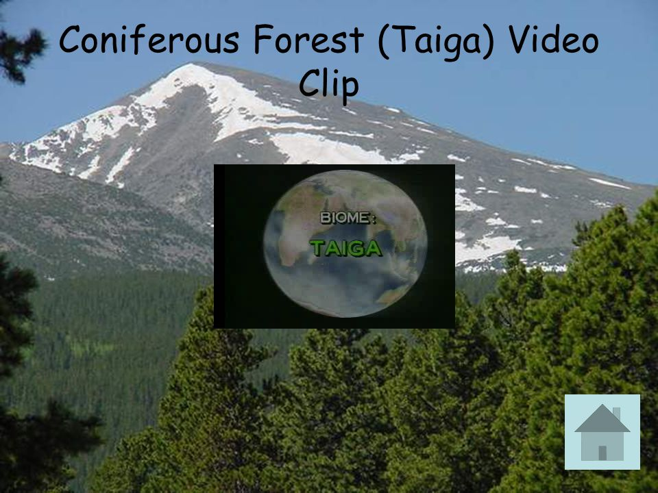 Coniferous Forest (Taiga) Video Clip