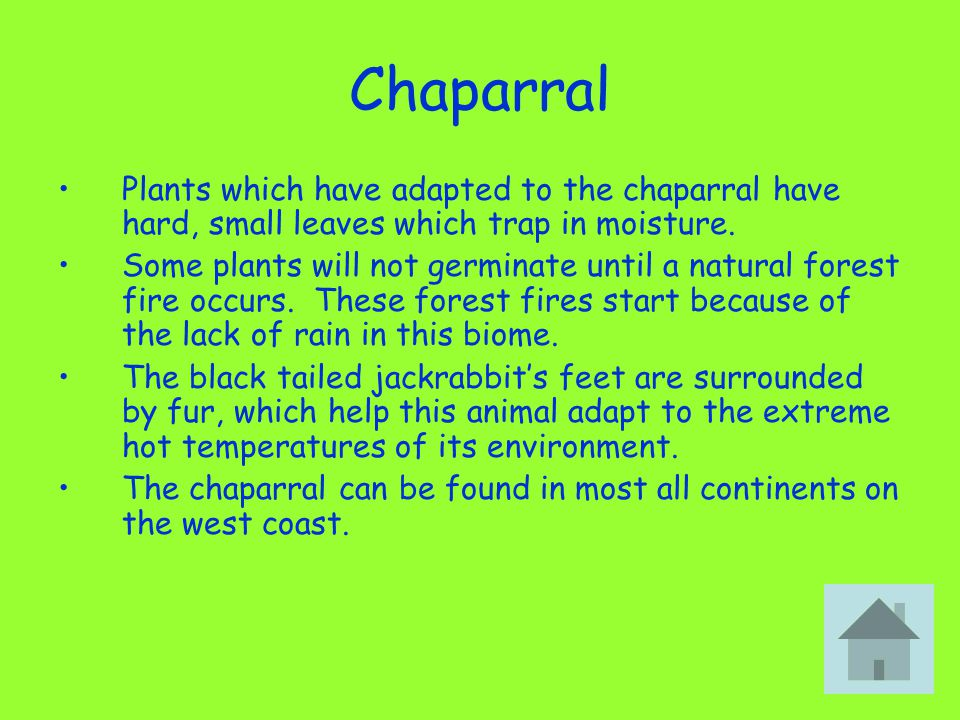 Chaparral Plants which have adapted to the chaparral have hard, small leaves which trap in moisture.