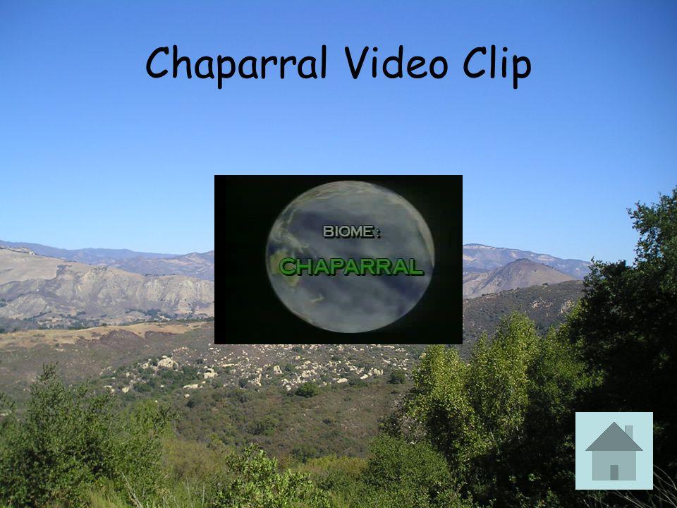 Chaparral Video Clip