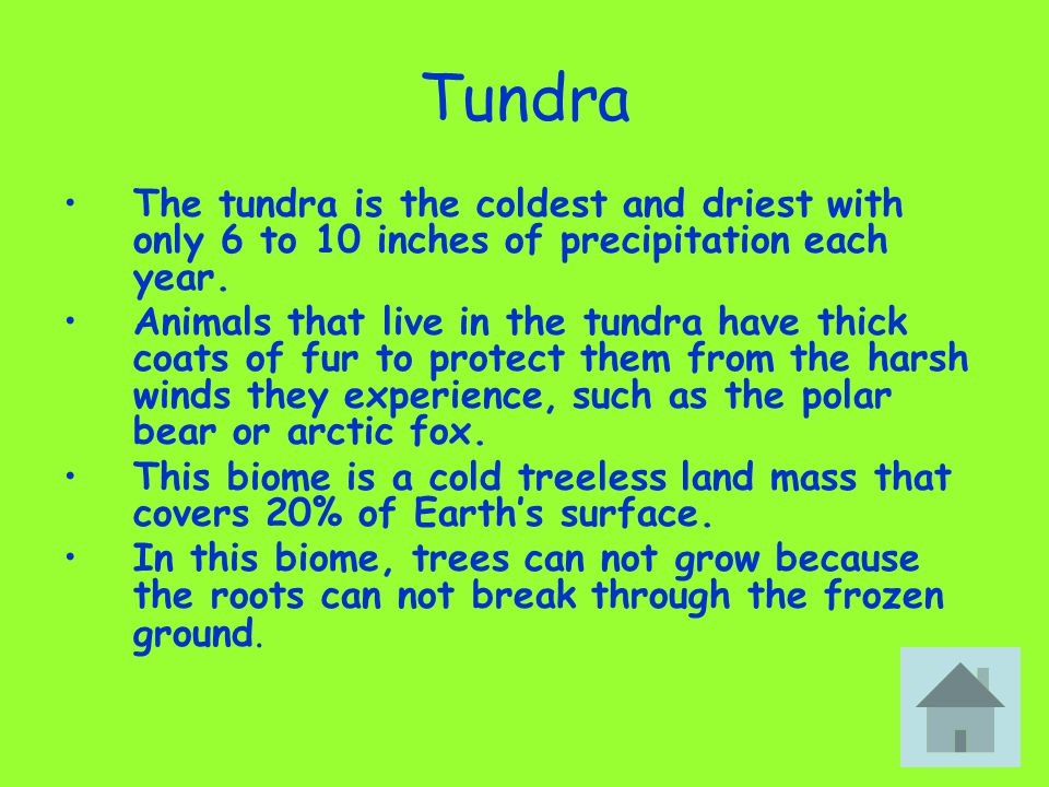 Tundra The tundra is the coldest and driest with only 6 to 10 inches of precipitation each year.