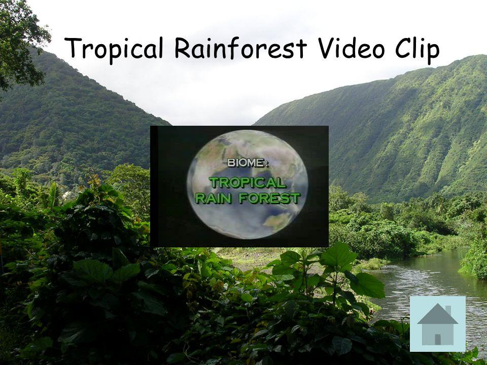 Tropical Rainforest Video Clip