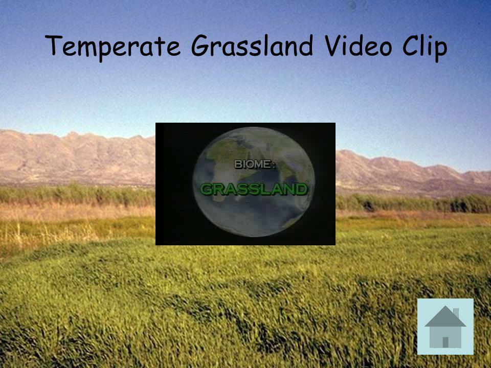 Temperate Grassland Video Clip