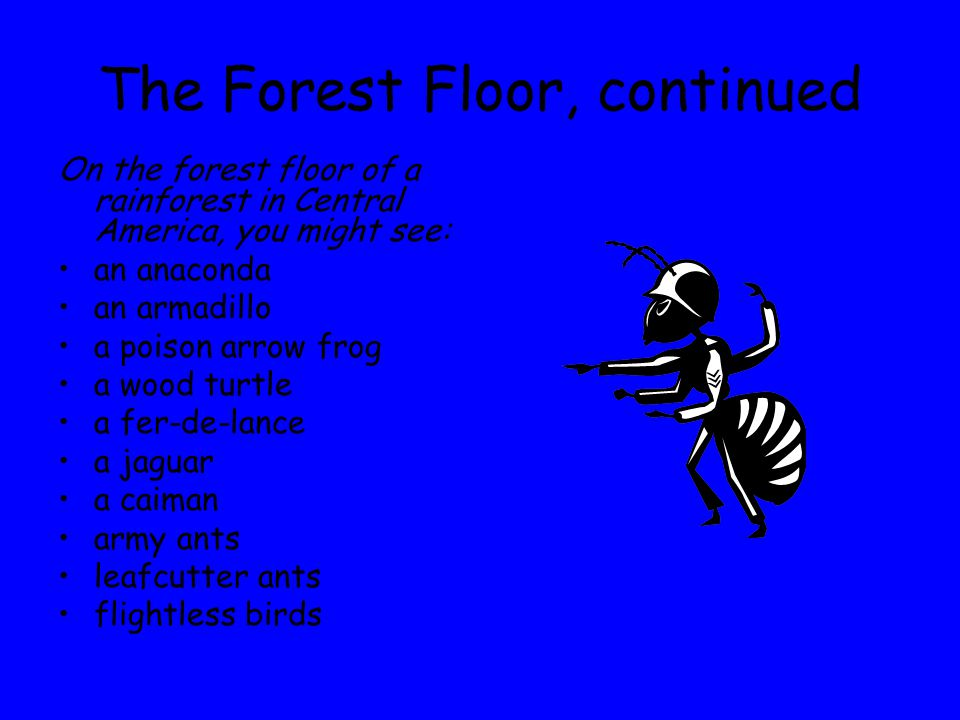 The Forest Floor, continued