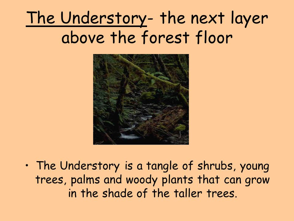 The Understory- the next layer above the forest floor