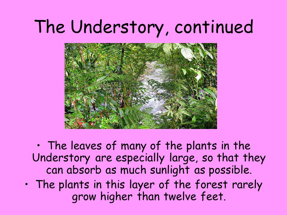 The Understory, continued