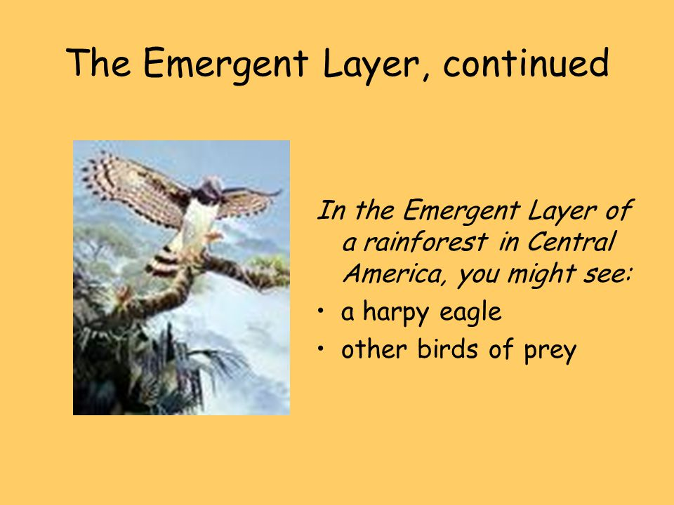 The Emergent Layer, continued