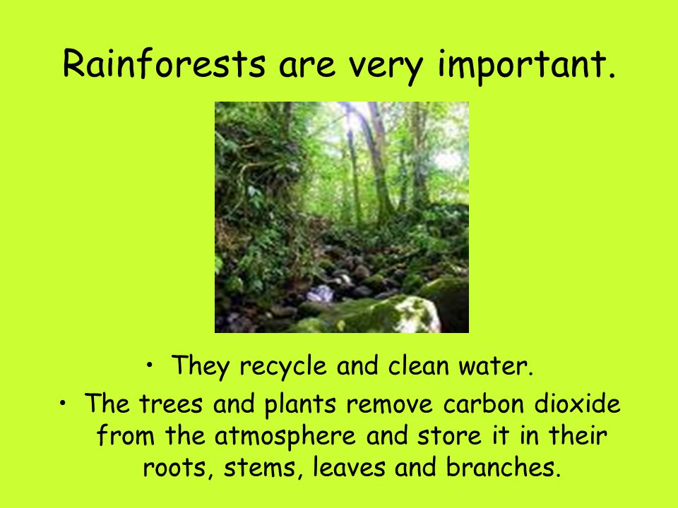 Rainforests are very important.