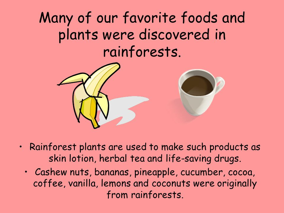 Many of our favorite foods and plants were discovered in rainforests.