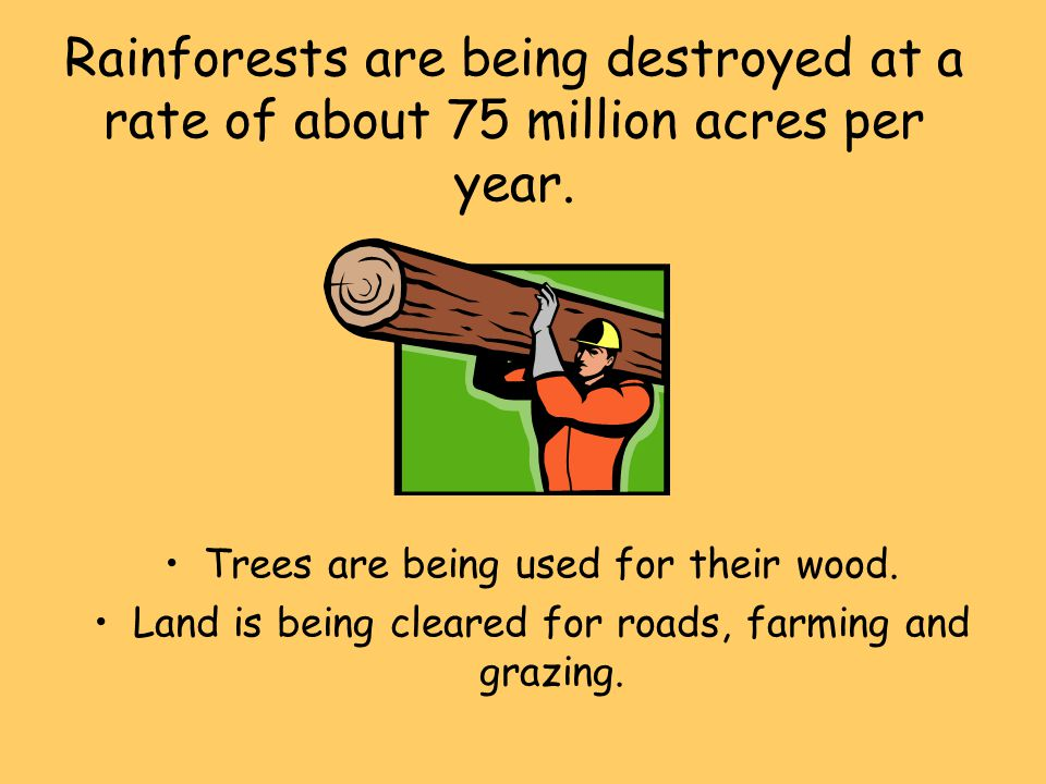 Rainforests are being destroyed at a rate of about 75 million acres per year.