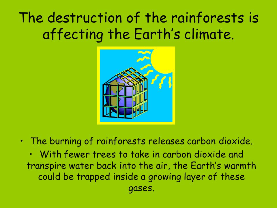 The destruction of the rainforests is affecting the Earth's climate.