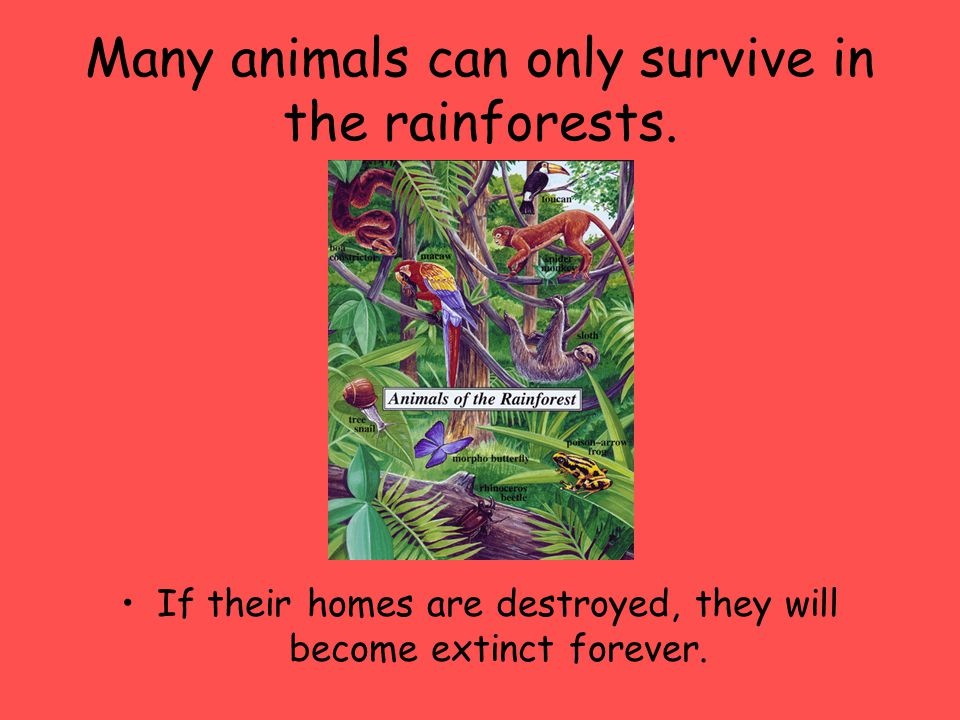 Many animals can only survive in the rainforests.