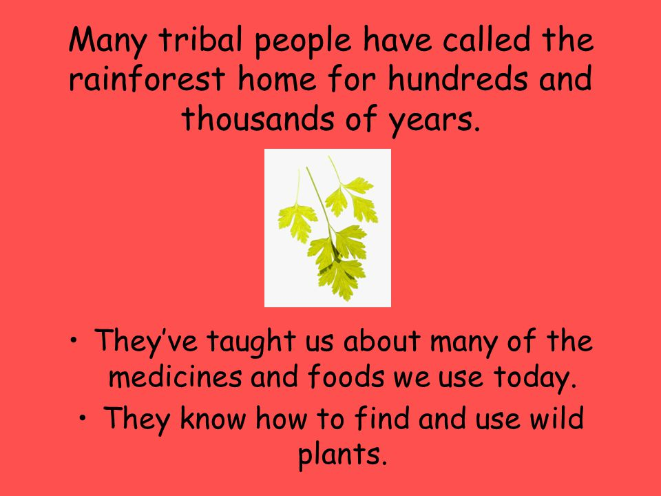 Many tribal people have called the rainforest home for hundreds and thousands of years.