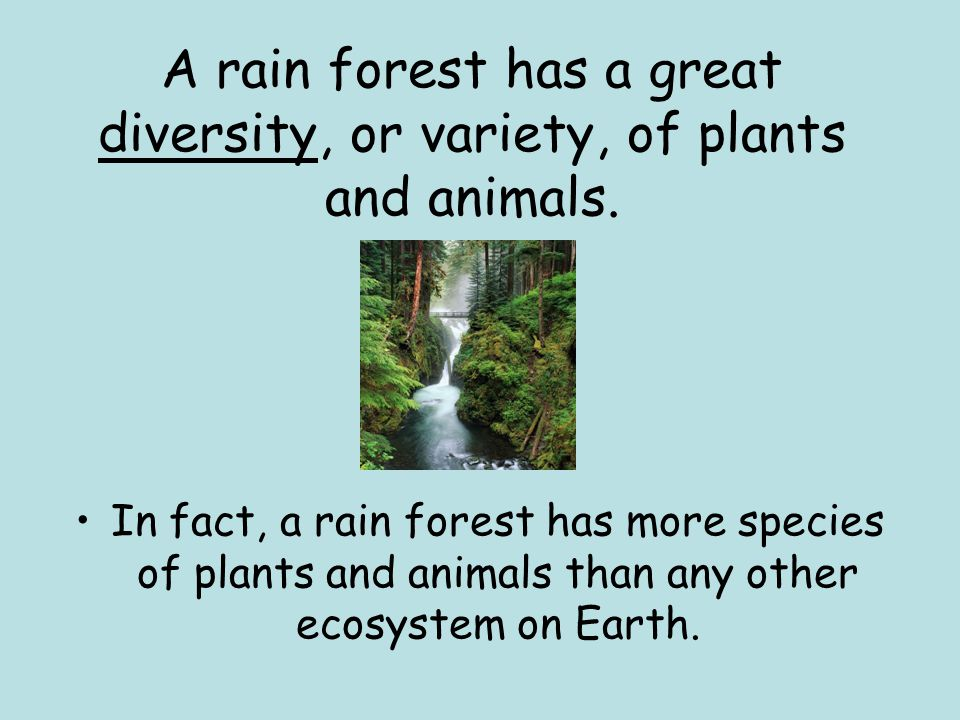 A rain forest has a great diversity, or variety, of plants and animals.