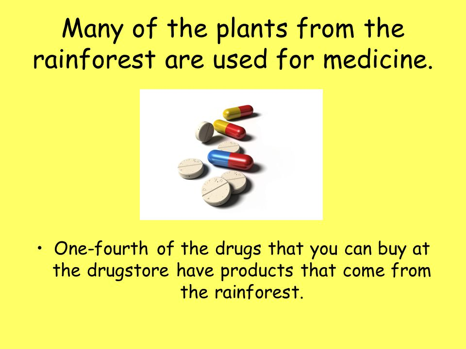 Many of the plants from the rainforest are used for medicine.