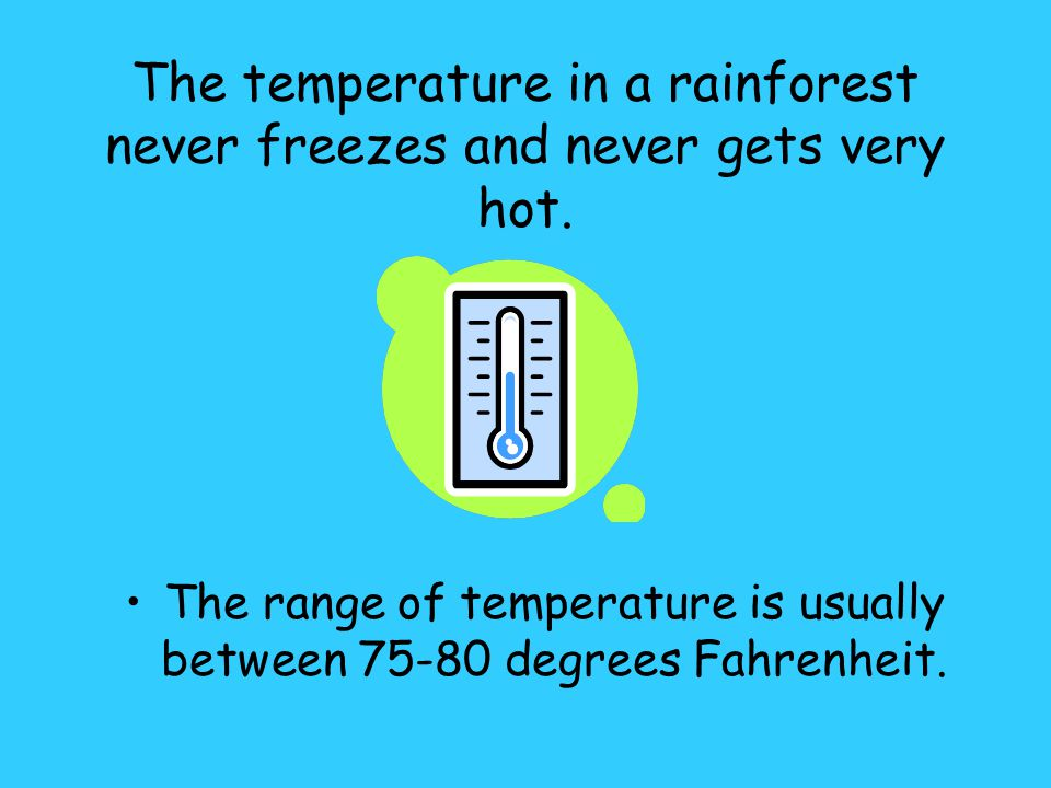 The temperature in a rainforest never freezes and never gets very hot.
