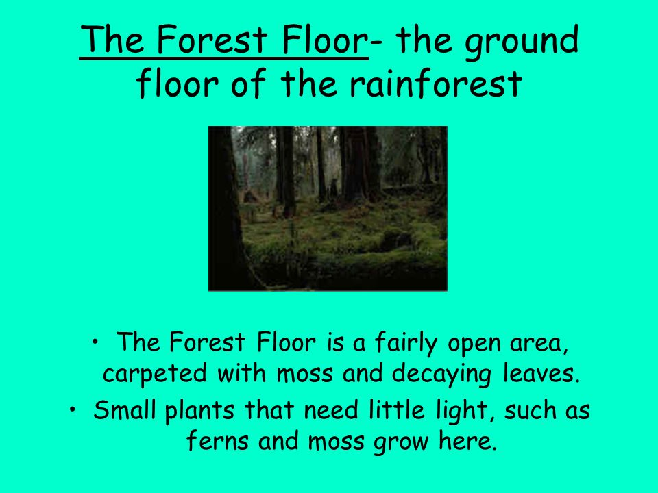The Forest Floor- the ground floor of the rainforest