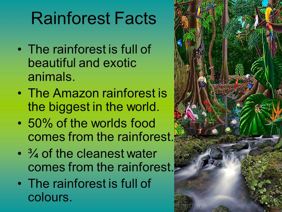 Rainforest Facts The rainforest is full of beautiful and exotic animals. The Amazon rainforest is the biggest in the world.