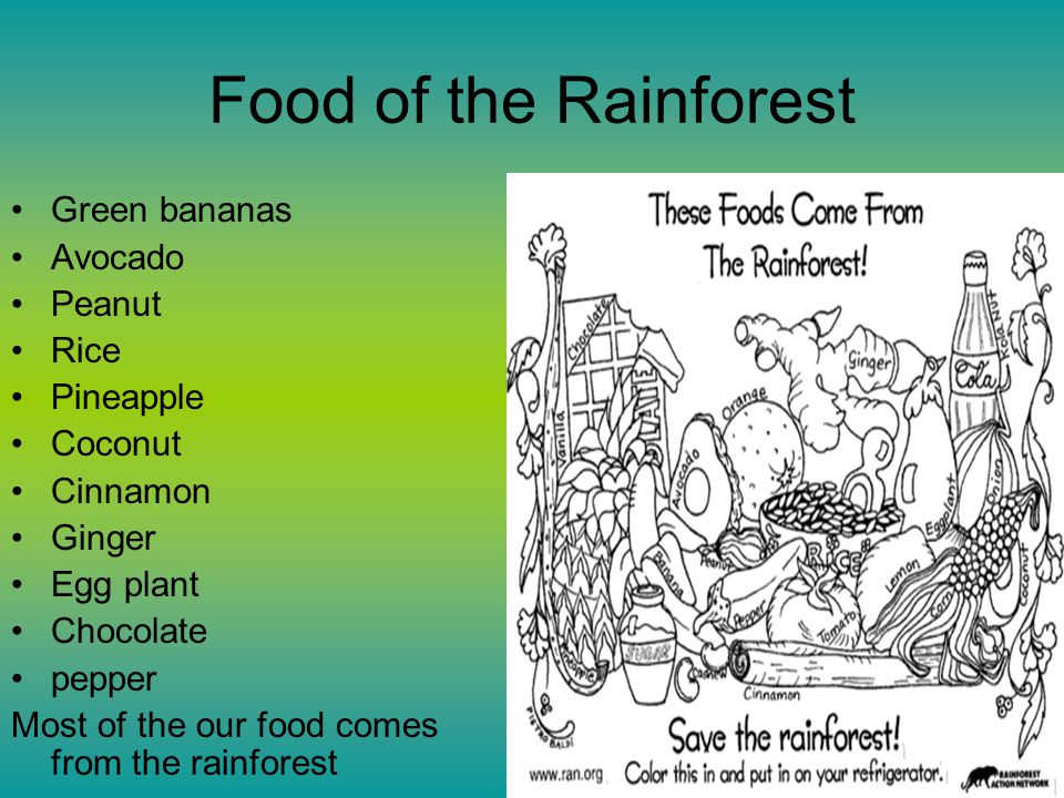 Food of the Rainforest Green bananas Avocado Peanut Rice Pineapple