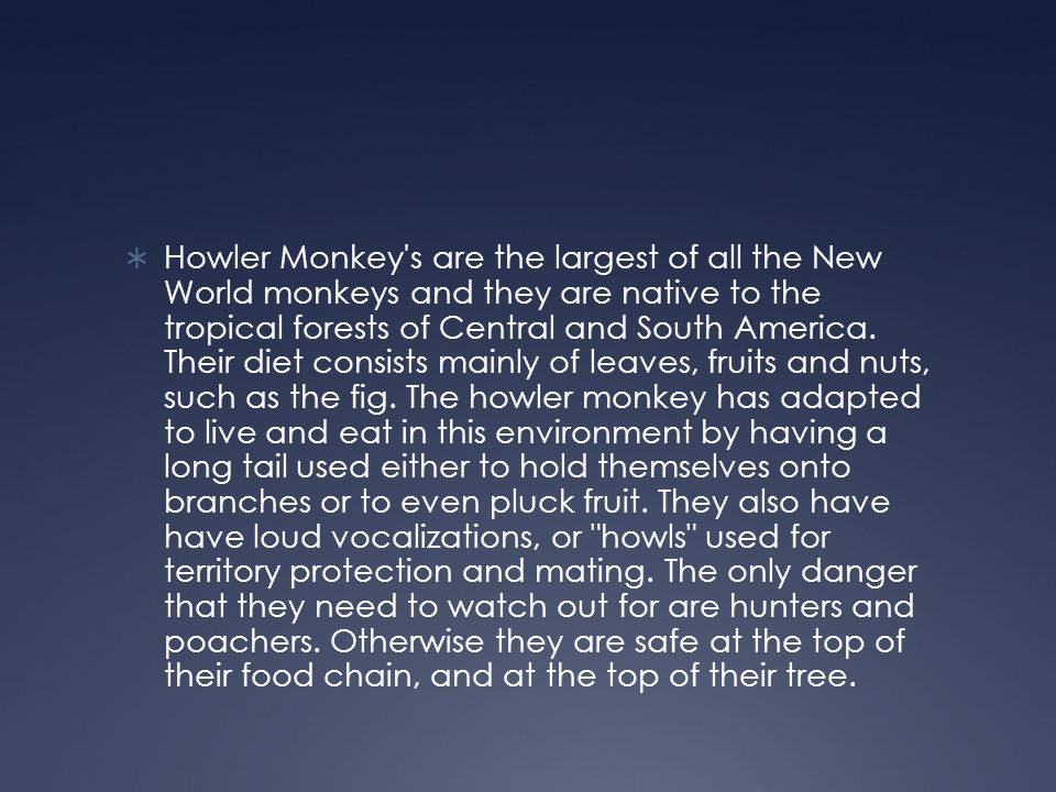 Howler Monkey s are the largest of all the New World monkeys and they are native to the tropical forests of Central and South America.