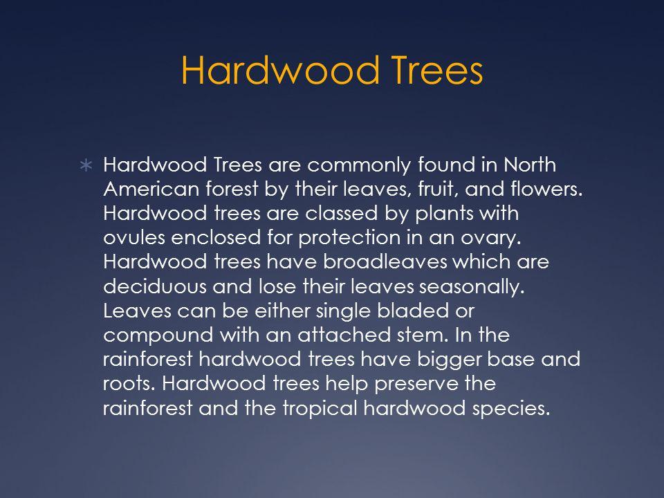 Hardwood Trees