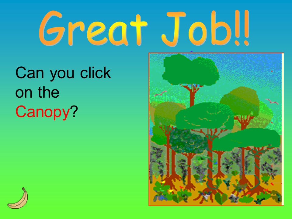 Great Job!! Can you click on the Canopy
