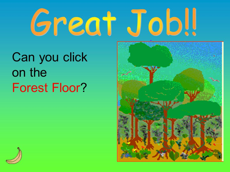 Great Job!! Can you click on the Forest Floor