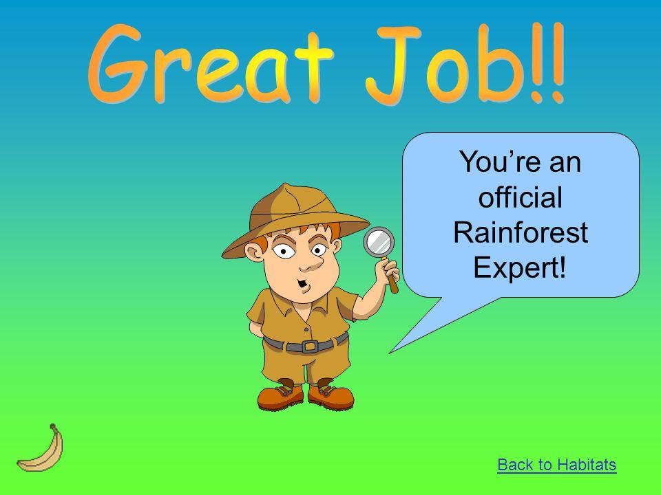 You're an official Rainforest Expert!