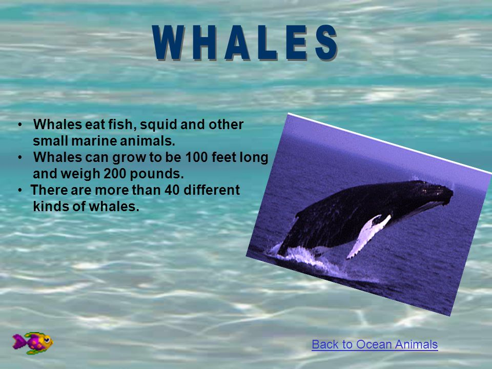 WHALES Whales eat fish, squid and other small marine animals.