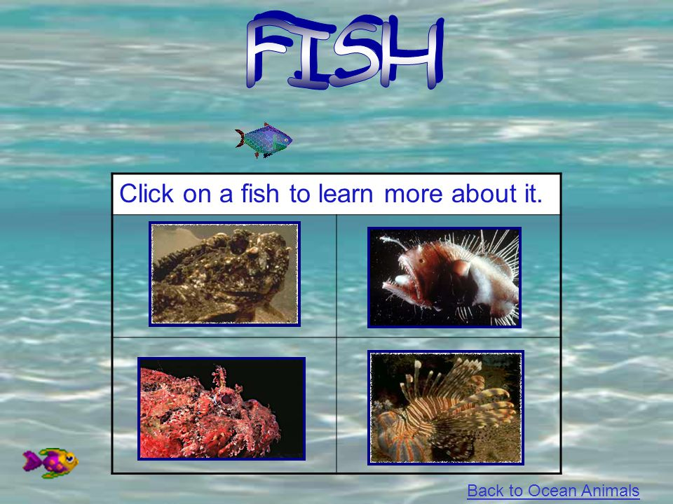 FISH Click on a fish to learn more about it. Back to Ocean Animals