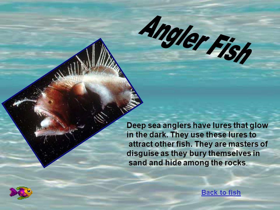 Angler Fish Deep sea anglers have lures that glow