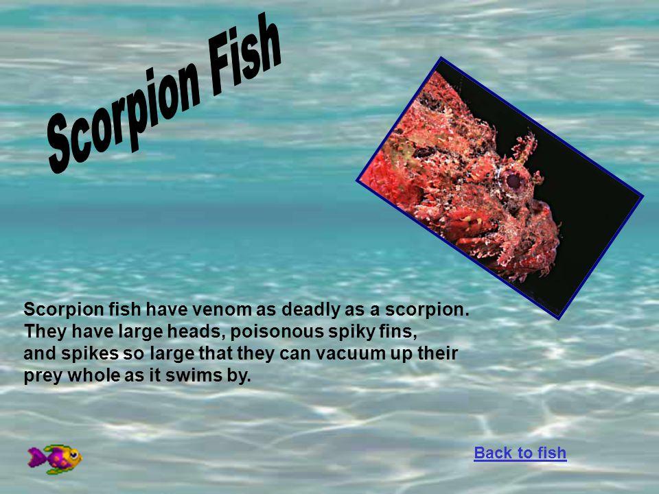 Scorpion Fish Scorpion fish have venom as deadly as a scorpion.