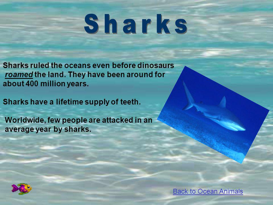 Sharks Sharks ruled the oceans even before dinosaurs