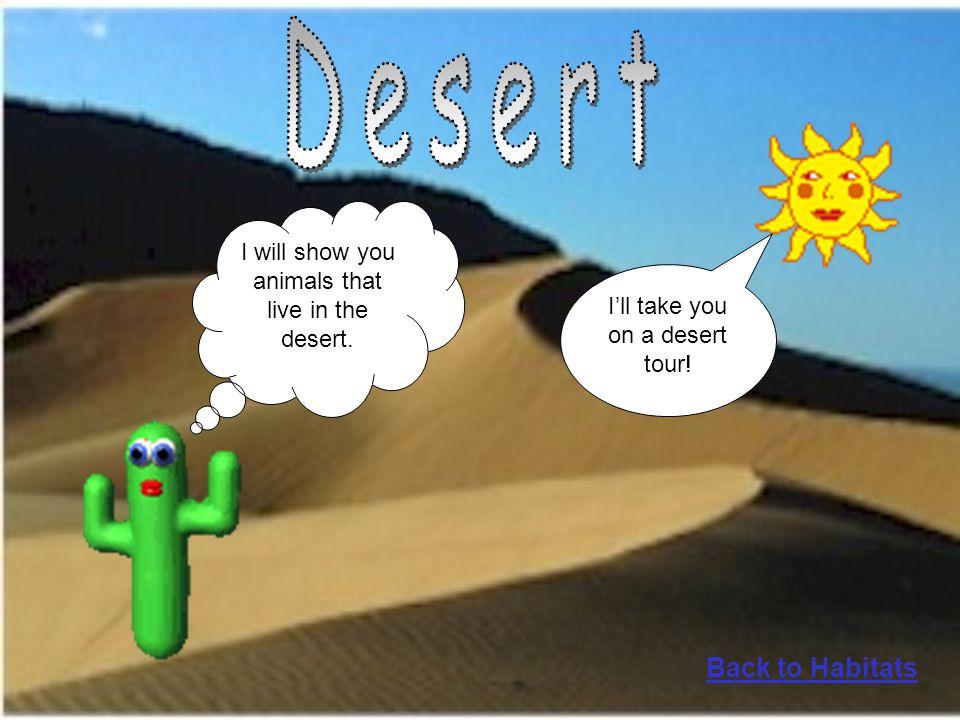 Desert Back to Habitats