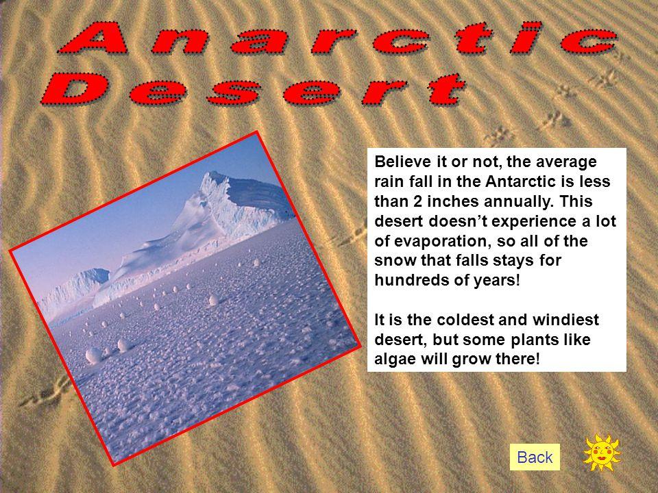 Anarctic Desert.