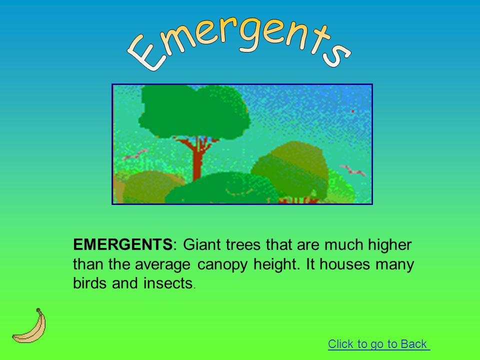 Emergents EMERGENTS: Giant trees that are much higher