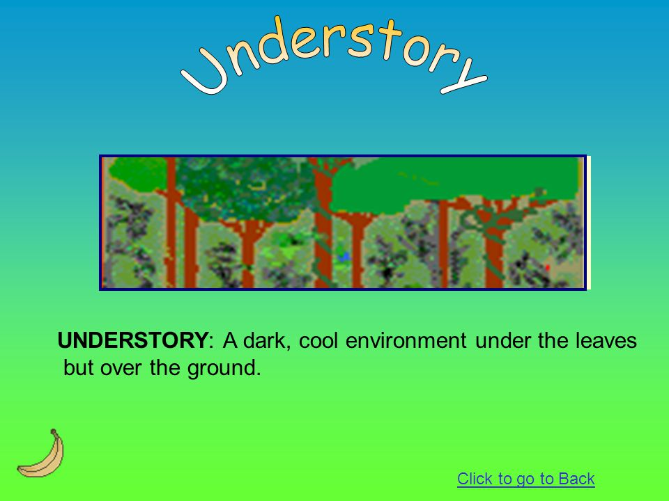 Understory UNDERSTORY: A dark, cool environment under the leaves